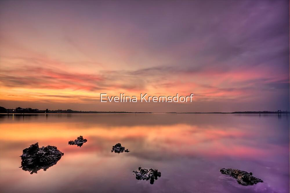Velvet Morning by Evelina Kremsdorf