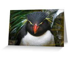 Rock-hopper Penguin Falkland Is.  Greeting Card