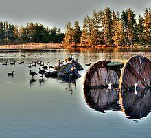 Alf Hole Goose Sanctuary by Larry Trupp
