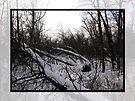 Snowy Forest Framed by Kayleigh Walmsley