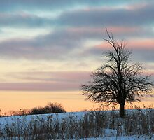 Sunrise Tree Silhouette by Geno Rugh