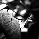 leaf by Matthew  Smith