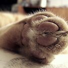 Kitty Paw by down23