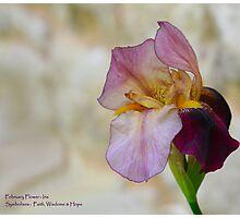 Iris - February Birth Flower Photographic Print