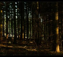 Wentwood Forest by Tim Topping