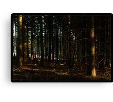 Wentwood Forest Canvas Print