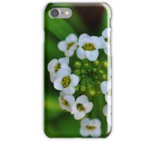 Sweet Alyssum iPhone Case/Skin