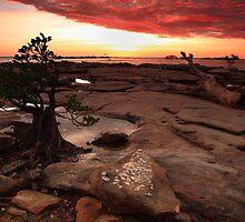 Bonsai Sunset by Andrew Brooks