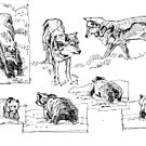 wolves and bears sketches by David  Kennett
