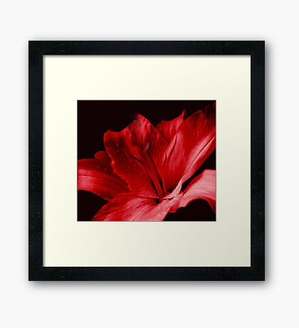 Red Lily Framed Print