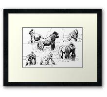Gorillas Framed Print