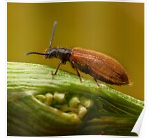 Beautifull small bug Poster
