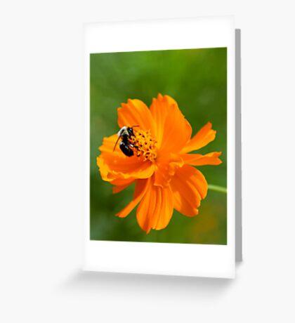 Rhapsody in Orange Greeting Card