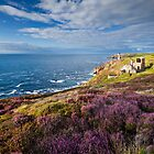 Heather on the cliffs at Levant Mine, Cornwall. by Justin Foulkes