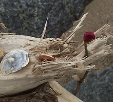 Driftwood - Skegness by Stephen Willmer