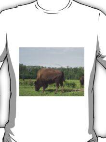 Bison Grazing, Elk Lake, Alberta, Canada T-Shirt