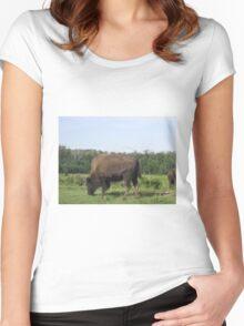 Bison Grazing, Elk Lake, Alberta, Canada Women's Fitted Scoop T-Shirt