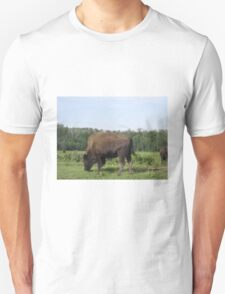 Bison Grazing, Elk Lake, Alberta, Canada Unisex T-Shirt