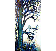 Contentment - Trees Photographic Print