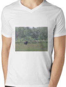 Bison, Elk Lake, Alberta, Canada Mens V-Neck T-Shirt