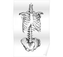 Partial Human Skeleton Poster