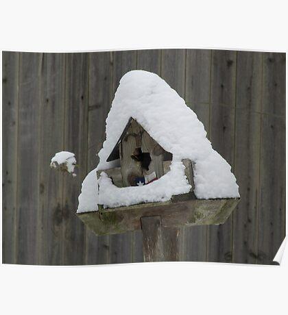 Lone Star Bird House Poster