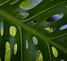Natures Peep Holes by Loreto Bautista Jr.