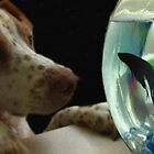 "Copper goes indoor fishing by Christine ""Xine"" Segalas"