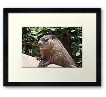 So what's this business about a shadow? Framed Print
