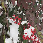 Snow Covered Nandina by tmarie1