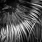 Scary Tree- Aldinga Xanthorrhoea  by Ben Loveday