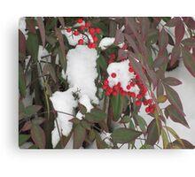 Snow Covered Nandina Bush - 2 Canvas Print