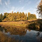 Armidale  Creek Bank by Odille Esmonde-Morgan