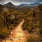 """""""Nature Trail"""" by Heather Thorning"""
