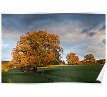 Three Trees lit by Autumn fire. Poster