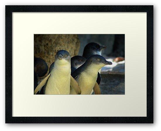 Little Penguins by Eve Parry