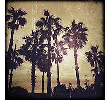 freshwater palms Photographic Print