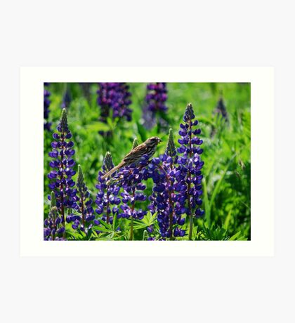 Sparrow Perched on the Lupine Art Print