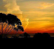sunset by winterland