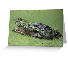 Gator in the Swamp Greeting Card
