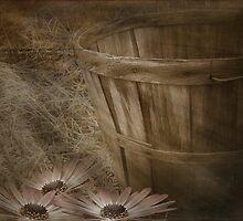 Sunbeams by Maria Dryfhout