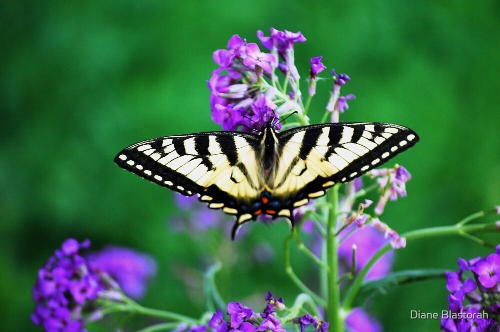 Swallowtail Butterfly by Diane Blastorah