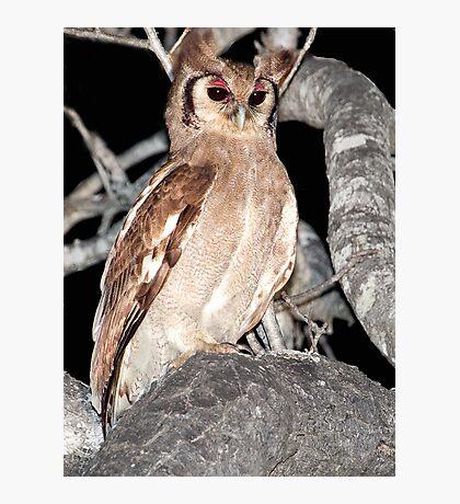 Verreaux's Eagle Owl Photographic Print