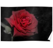 Rose's R Red Poster