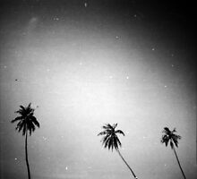 palms, kep, cambodia by tiro