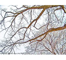 Winter Lace Photographic Print
