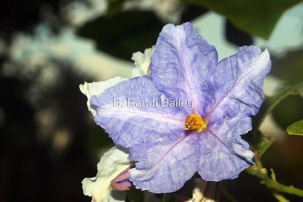 Like a purple star by ♥⊱ B. Randi Bailey