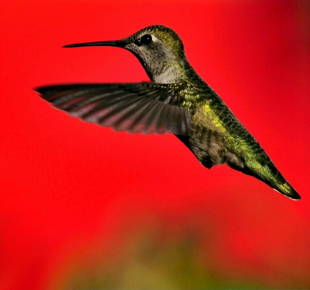 LITTLE RED HUMMER by RoseMarie747