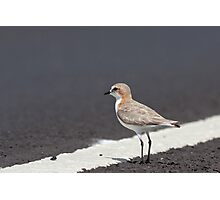 Female Red-Capped Plover Photographic Print