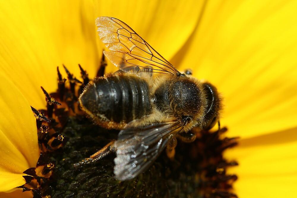 Bee by Lin-Ann Anantharachagan